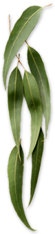 leaves